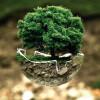 Den Umweltschutz in den Alltag integrieren