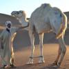 Entspanntes Trekking durch die Sahara