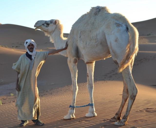 Bild: Marokko to go